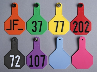 Medium 3-Star All-American Tags from Y-Tex - Hot Stamped