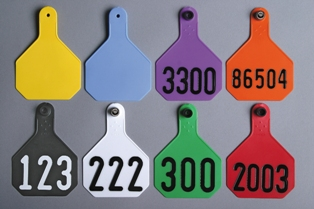 Large 4-Star All-American Tags from Y-Tex - Hot Stamped