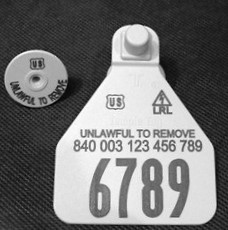 Temple Official 840 Medium Herdsman Tag Set - Available as Single Set or Matched Visual Pair