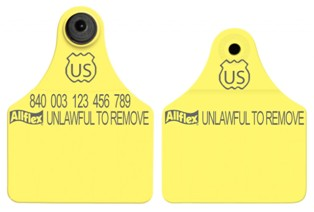 Official USDA '840' Maxi Tag with Global Large Male Set - Available Blank or Numbered